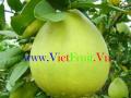 Tropenfrüchte, Gemüse