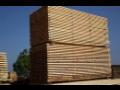 Výroba a prodej stavebního řeziva včetně dodávky a montáže vazeb