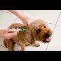 Povinn� o�kov�n� ps� proti vzteklin� Jablonec Liberec vakcinace.