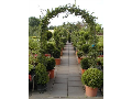 Zahradnictv� Brno, Mod�ice, balkonov� rostliny