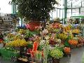 Zahradnictví Brno, Modřice, balkonové rostliny