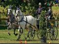Prodej a chov sportovních a kladrubských koní
