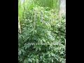 Zahradnictv� Subtropick� zahradnictv� Kruh Subtropick� zahradnictv� Kruh
