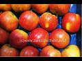 Prodej ovocných stromků, meruňky, třešně, broskvoně, jabloně, hrušně