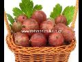 Prodej angreštů rybízů jahod josta švestky slivoně hrušky višně