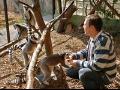 Jeden den chovatelem v zoo �st� nad Labem - postarejte se o slony nebo o pavilon exot�ria