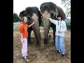 Jeden den chovatelem v zoo Ústí nad Labem - postarejte se o slony nebo o pavilon exotária