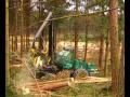 Těžba a přibližování dřeva harvestorovou technologií.