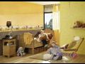 Tapety na zeď, bytové tapety, tapetování Znojmo