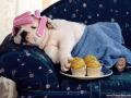 Profesionální úprava psů, prodej oblečků a kosmetiky