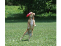 Oční vyšetření pro psy, měření očního tlaku u zvířat - profesionální péče