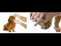 Veterina, veterinář - čipování, očkování zvířat i sonografické vyšetření