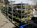 Zahradnictví, sadové úpravy Opava