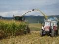 Zem�d�lsk� pr�ce, traktorov� pr�ce-osev, v�mlat obilovin, sklize� na sil�