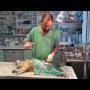 Veterinární pohotovost