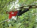 Rizikové kácení stromů, práce na stromech Praha