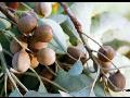 Detoxikace organismu přírodní cestou, to je Triphala