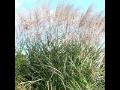 Okrasné trávy Pardubice, Hradec Králové, Chrudim, Holice