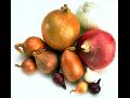 Großhandel mit Zwiebeln Zwiebel Produktion Verkauf von Zwiebeln tschechische hochwertige Zwiebel, die Tschechische Republik