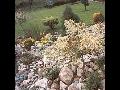 Projekce zahrad Vset�n