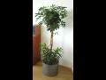Hygienické a čisté rostliny do interiéru