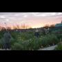 Zahradnictv� Brno, Mod�ice kv�tiny pokojov�, �ezan�, balkonov� rostliny.