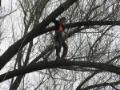 Prořezávání stromů za použití stromolezecké techniky Praha a okolí