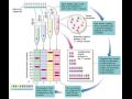 Synt�za oligonukleotid� - spojen� um�l� DNA