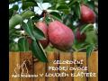 Prodej ovoce, jablek, hru�ek, �vestek, t�e�n�, vi�n� Znojmo