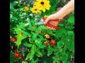 Zahradní nářadí, technika a doplňky Brno-venkov