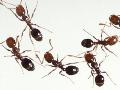 Dezinfekce, deratizace, dezinsekce škůdců Chomutov