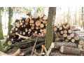 Kvalitn� dubov� palivov� d��v� prodej Praha