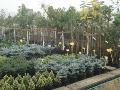 Obchod poradenstv� zahradnictv� Brno venkov