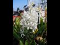 Zahradnictví prodej jarních květin Kolín