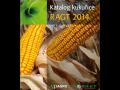 Prodej a výroba osiv kukuřice Praha západ - nabízíme více jak 22 hybridů