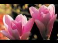 květiny Praha, prodej rostlin