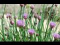 rostliny, okrasné školky Praha