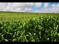 Velkoobchod, prodej, výrobce, pěstitel zeleniny Jihomoravský kraj