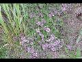 Kapradiny, traviny