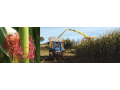 Prodej osiv, kuku�ice, obilniny Praha-z�pad - dodavatel kvalitn�ch poln�ch osiv