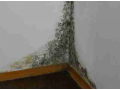 Deratizace, huben� hmyzu, dezinfekce, Chomutov