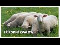 Prodej výrobků z ovčí vlny, e-shop, Zlín