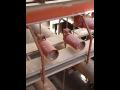 Dodávka komponent, kompenzačních prvků pro potrubní systémy