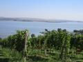 Ubytování Pálava, Mušovská jezera