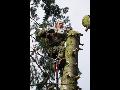 Praha odklízení sněhu, kácení stromů, výškové práce