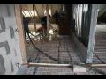 Novostavby, stavební činnost Opava