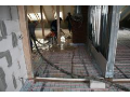 Novostavby, stavebn� �innost Opava