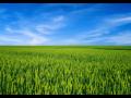 Pěstování brambor, okurek nakladaček, pšenice, kukuřice, jižní Morava, Znojmo, Brno