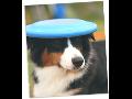 E-shop, prodej hra�ky pro psy, v�cvik ps�, ps� �kola Olomouc