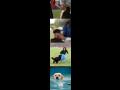 E-shop, prodej hračky pro psy, výcvik psů, psí škola Olomouc